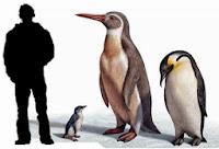 Resultado de imagen para pinguinos eoceno