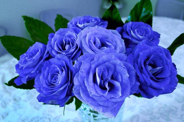 cây hoa hồng đẹp nhất