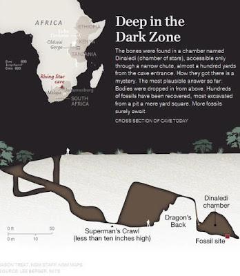 Ditemukan Fosil Nenek Moyang Manusia yang Baru