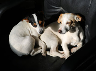 The puppies tried to steal my seat