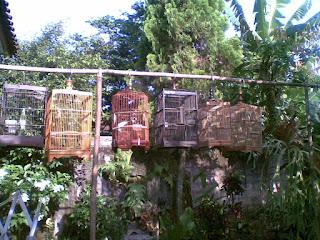 Metode Penjemuran Yang Benar Untuk Burung Pemakan Serangga dan Pemakan Biji-Bijian