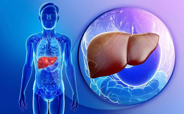 علاج وجع الكبد بالطب البديل والأعشاب الطبيعية