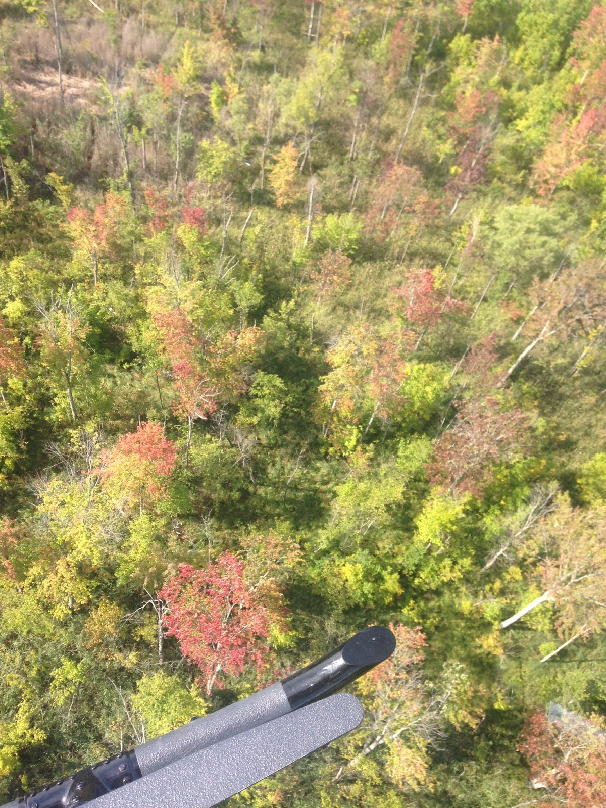 Bats (and other wildlife) of Northwest Ohio: September 2016
