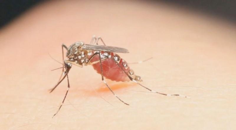 virus-zika-provincia-azua