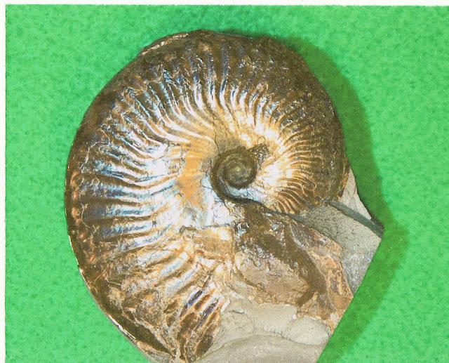 fossiles en fonction de l'emplacement des fossiles dans les strates