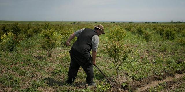 Armenia sancionaría severamente la tala ilegal