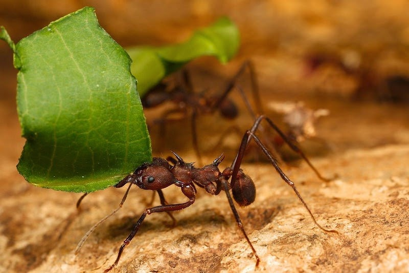 أقوى الحشرات على وجه الأرض