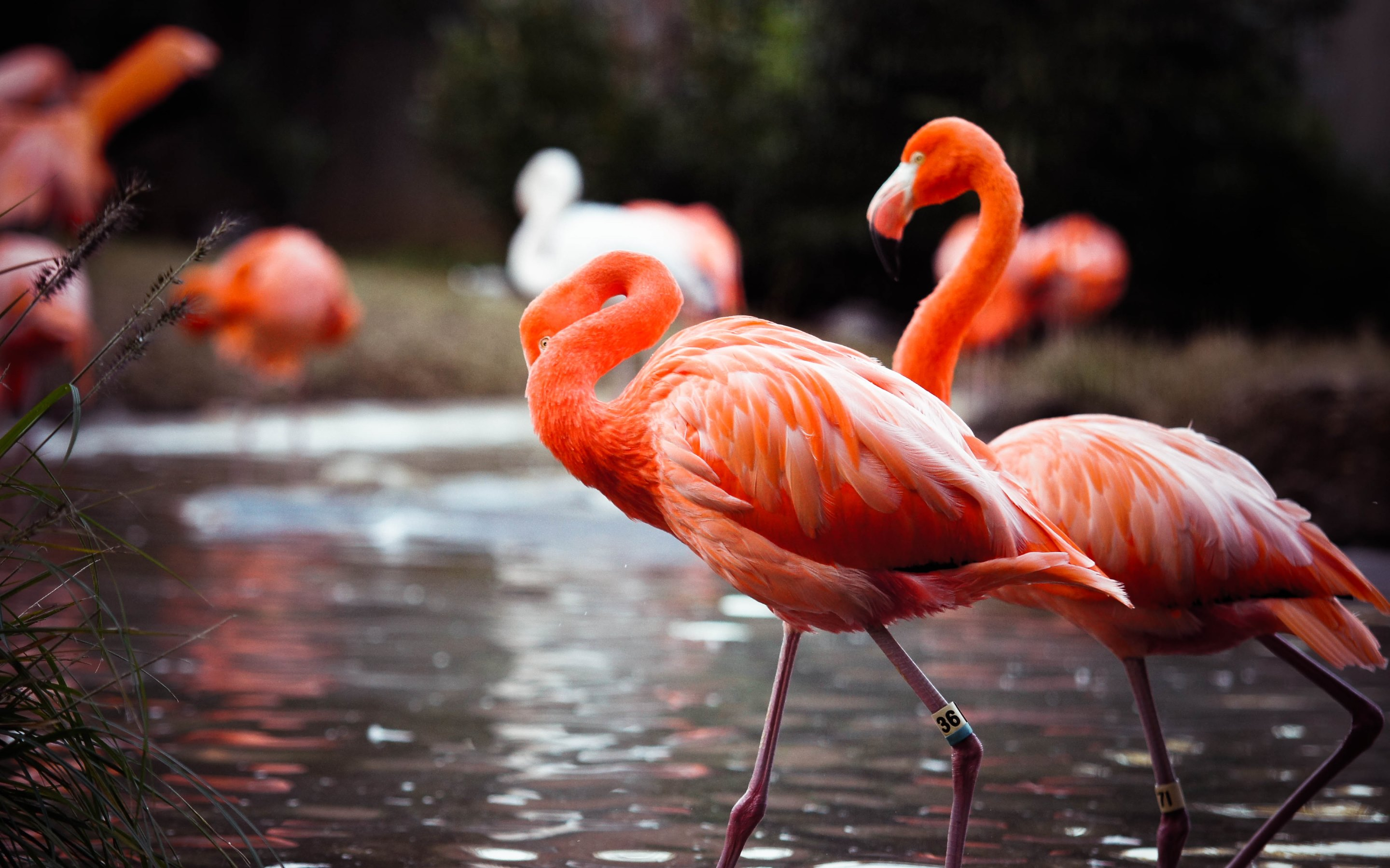 flamingos wallpapers in hd 4k and wide sizes