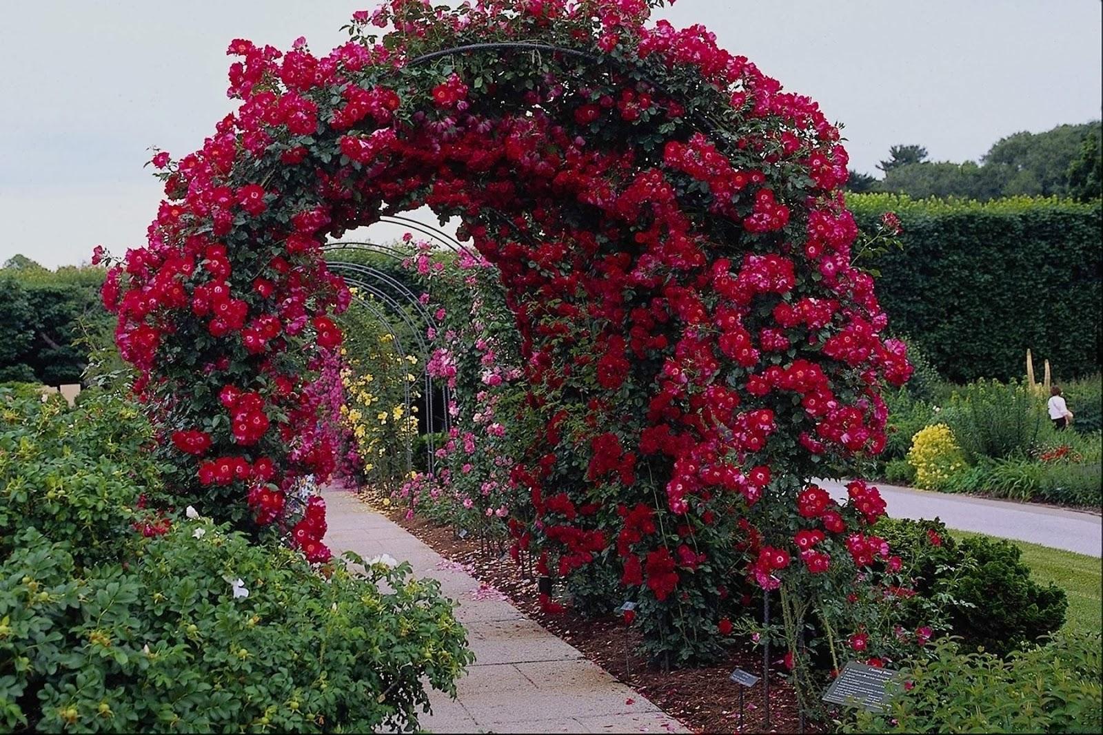 Rose Garden Wallpapers  Wallpaper Gallery