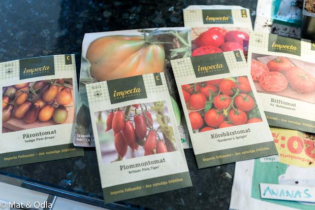 tomatfröer impecta