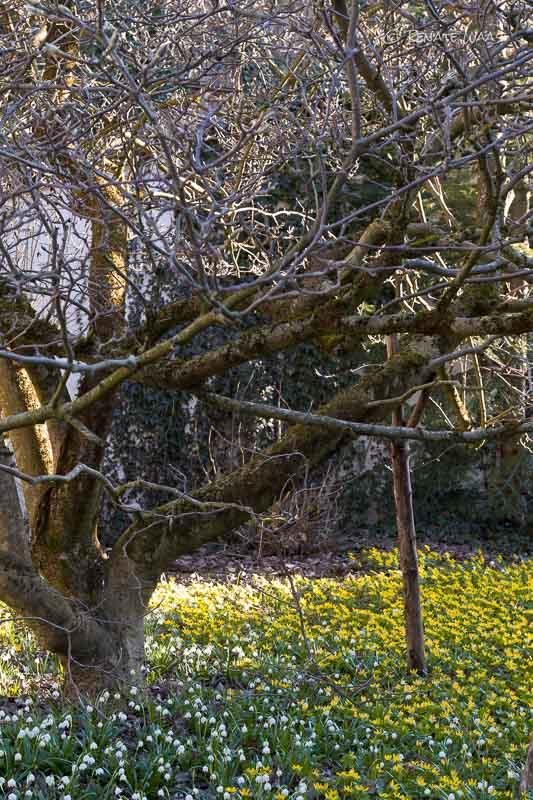 Gartenblog geniesser garten fruehlingsblueher erste blueten im garten - Geniesser garten ...