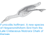 http://sciencythoughts.blogspot.co.uk/2015/11/fumicollis-hoffmani-new-species-of.html