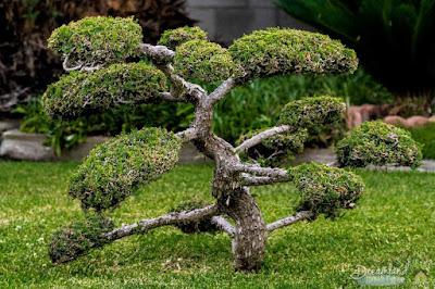 Items Needed To Grow The Tree Like A Bonsai