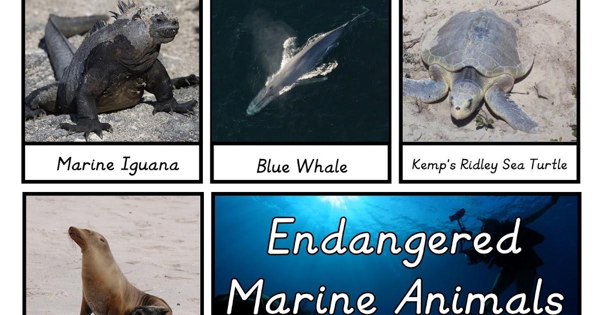 Endangered Marine Animals 3 Part Cards on Spring Sensory Crafts