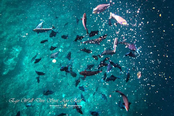 Ego Wall Dive Point, Apo Reef - Schadow1 Expeditions