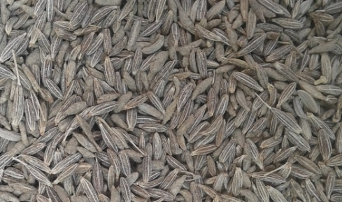 Jeera / Cumin Maintains Blood Sugar Level