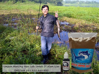 Umpan Mancing Ikan Lele Untuk Di Alam Liar