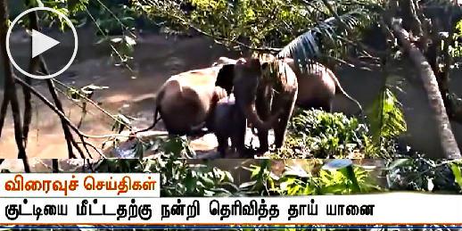 சேற்று குழியில் சிக்கிய தனது குட்டியை காப்பாற்றியவர்களுக்கு தும்பிக்கையை தூக்கி நன்றி சொல்லி சென்ற காட்டு யானை - வைரல் வீடியோ, Tamil viral video, whatsapp viral in tamil,
