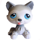 Littlest Pet Shop Small Playset Husky (#70) Pet