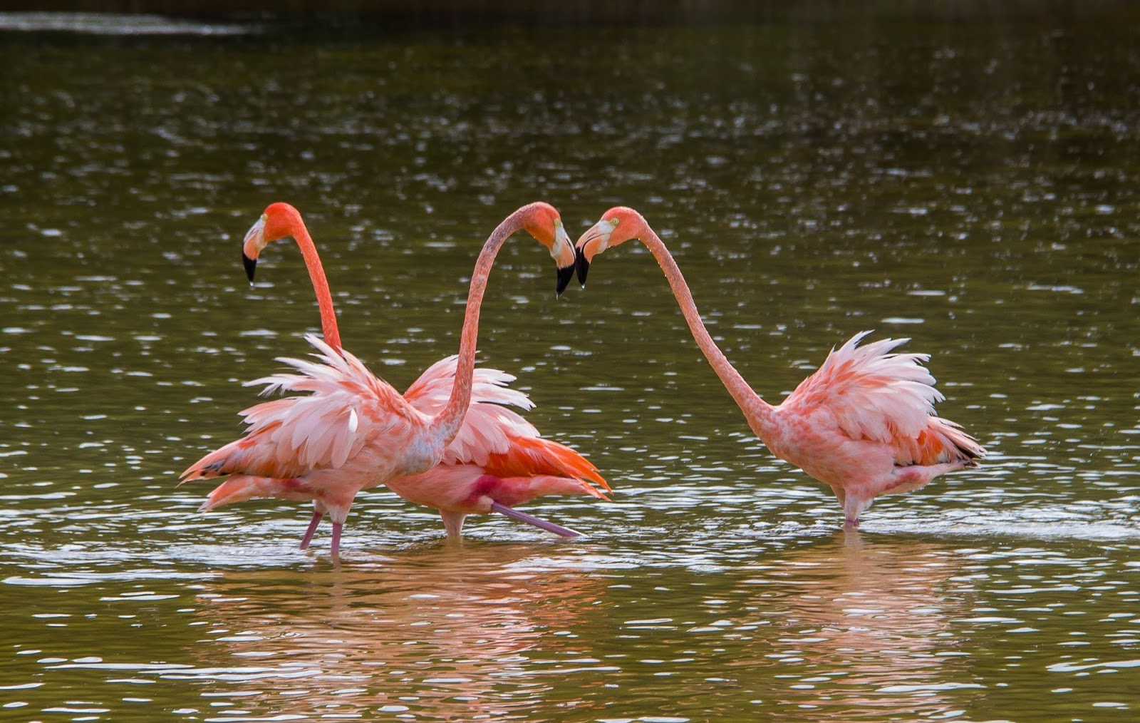 "<img src  Largest populations of pink flamingos in the world.jpg"" lt="" http://dailytravelexperience.blogspot.rs/"" />"