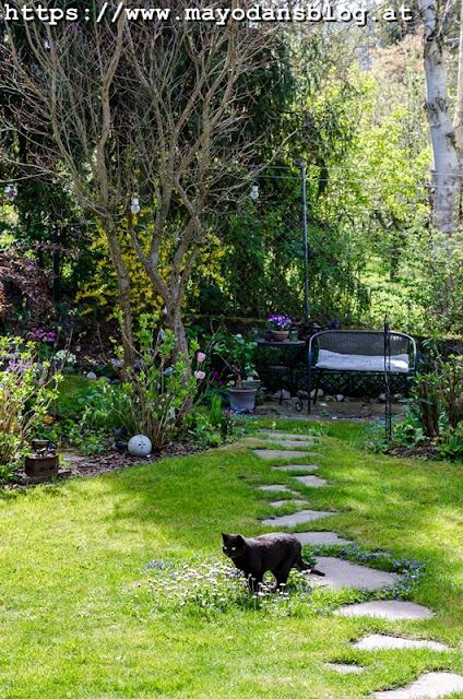 Frühlingsgarten mit Katze