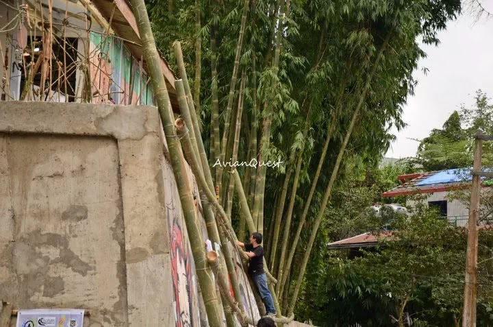 Tamawan Village Making of a Graffitti Mural Baguio City Philippines 75