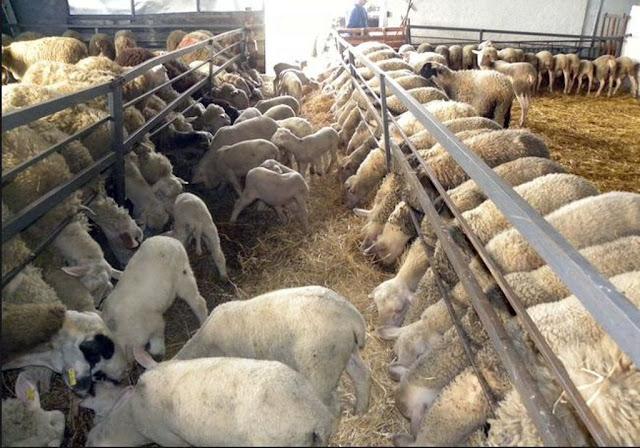 Αποτέλεσμα εικόνας για ΕΛΓΑ: Σήμερα οι αποζημιώσεις σε 1.081 δικαιούχους κτηνοτρόφους