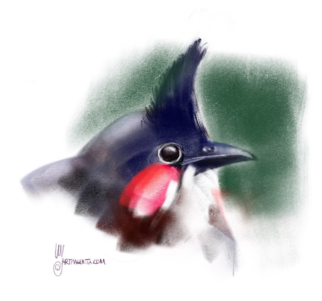 Red-whiskered bulbul a bird painting by Artmagenta