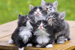 Pelatihan Pecinta Kucing