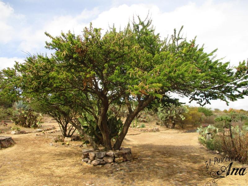 Cactus y Suculentas - Blog 1