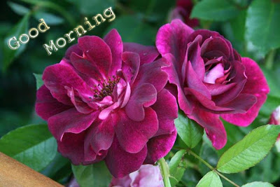 good morning with blooming flowers