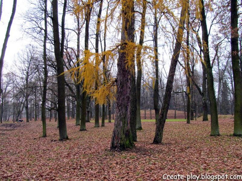 ноябрь осень Гатчинский парк