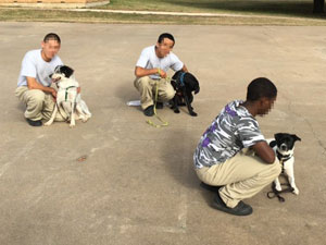 youth and shelter dogs team up to rise above troubled