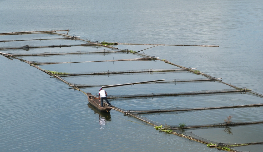 Tilapia Fish Cages in Lake Sebu