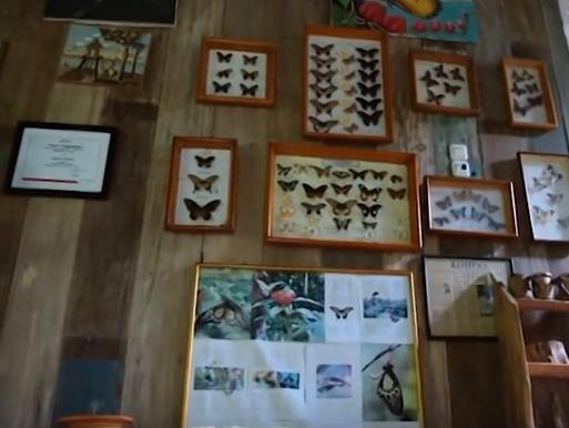 kupu-kupu yang diawetkan di museum taman kupu-kupu gita persada lampung