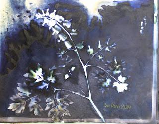 Wet cyanotype_Sue Reno_Image 597