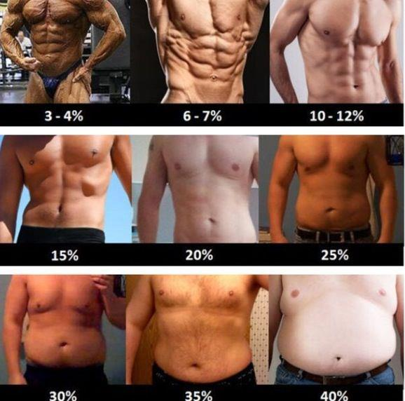 what's my body fat percentage bodybuilding