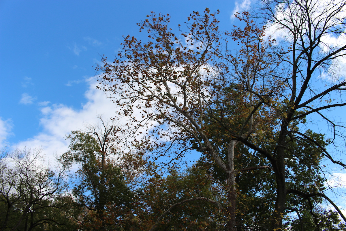 This is a beautiful scenic shot of the Brandywine Park and it's a shot of the trees and sky.