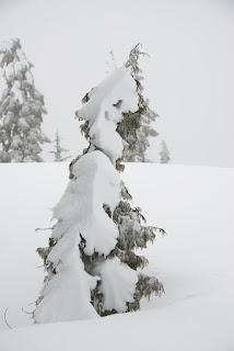 Mount Becher Strathcona Park - Matthew Lettington