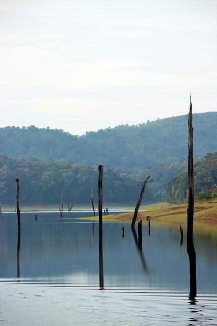 Periyar, Boating, view, Dried stem, morning, Thekkady, kerala