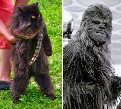 Chewbacca y este gato negro.