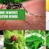 Best Home Remedies for Dengue Fever