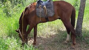 Aposentado cai cavalo morre
