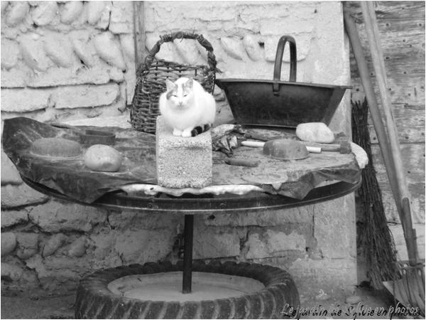 photo noir et blanc, la ferme et le chat