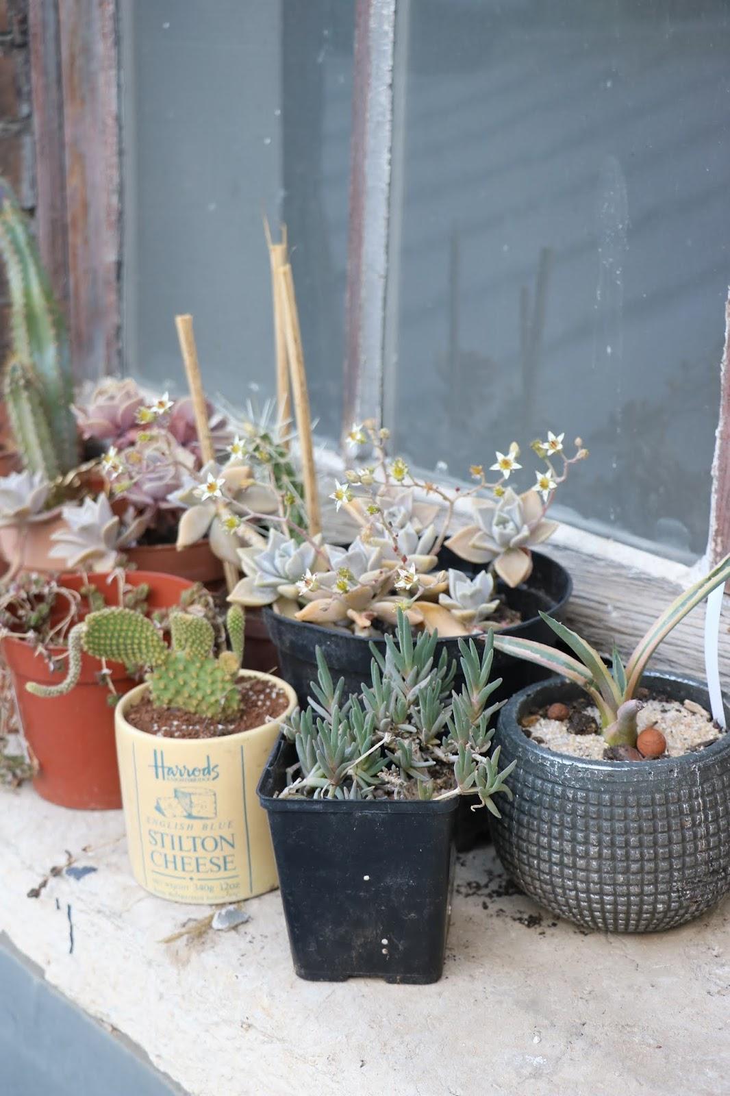 Comment Arroser Mes Plantes Pendant Les Vacances mes plantes d'interieur (+ mini guide) - lily fairly