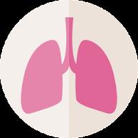 lung-flat-icon-vetarq