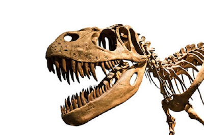 Dinosaurs 'already in decline' before asteroid apocalypse