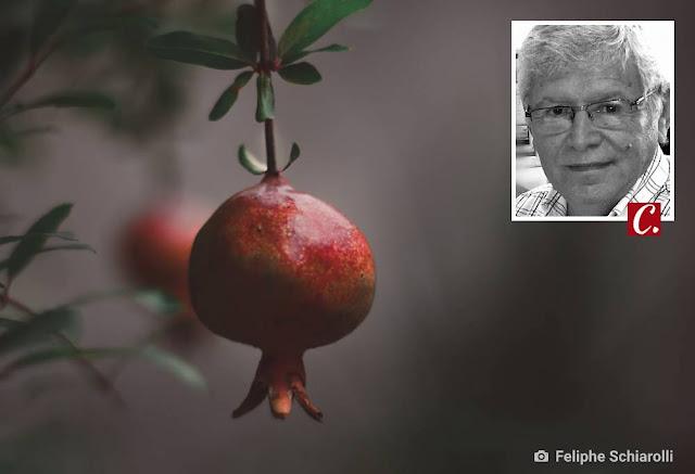 ambiente de leitura carlos romero frutuoso chaves fruta roma pierre landolt varzeas sousa grego malaka exportacao paraiba figueiroa oliveira