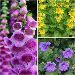 http://www.lifeofpottering.co.uk/2014/06/in-garden-june.html