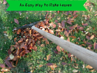 Such a easy way to rake leaves and it helps your garden too!  Vickie's Kitchen and garden